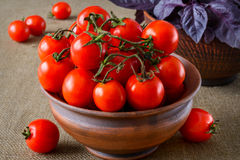 Fresh tomatoes with basil Stock Image