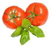 Fresh Tomatoes And Basil Herb Royalty Free Stock Photos