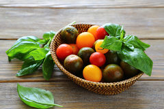 Fresh tomatoes with basil in a wicker basket Stock Photos