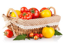 Fresh tomatoes in the basket Royalty Free Stock Image
