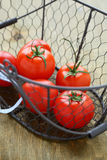 Fresh tomatoes in a basket Royalty Free Stock Image