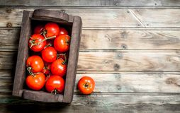 Fresh tomatoes in the box stock photo