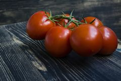 Fresh tomatoes on a branch stock photography