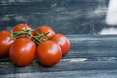 Fresh tomatoes on a branch stock images