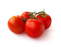 Fresh tomatoes on branch royalty free stock photos