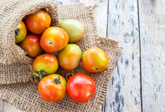 Fresh tomatoes in burlap sack on wooden table Royalty Free Stock Photos