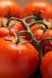 Fresh tomatoes. Close up of fresh tomatoes Royalty Free Stock Image