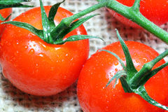 Fresh tomatoes close up. Stock Photography