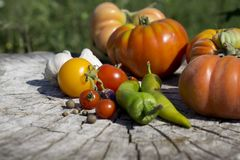 Fresh tomatoes. Colorful image with assorted colorful tomatoes Stock Images