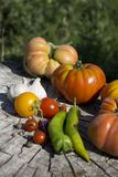 Fresh tomatoes. Colorful image with assorted colorful tomatoes. Royalty Free Stock Images