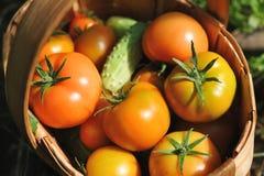 Fresh tomatoes and cucumbers Stock Photo