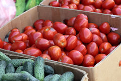 Fresh tomatoes and cucumbers. In the boxes at a market Stock Photography