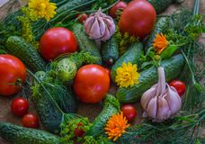 Fresh tomatoes, cucumbers and garlic together with dill and calendula flowers,on the table royalty free stock image
