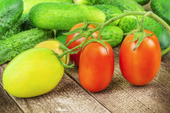 Fresh tomatoes and cucumbers from the home garden Royalty Free Stock Photos