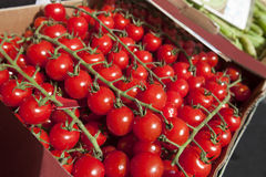 Fresh tomatoes on display at store Royalty Free Stock Photography