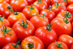 Fresh tomatoes in drops of dew as a background Royalty Free Stock Photo