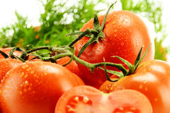 Fresh tomatoes with drops of water Stock Photography