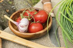 Fresh tomatoes and garlic in wooden bowl. Natural healthy food concept Stock Photos