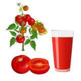 Tomatoes and glass of juice vector illustration