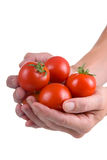 Fresh tomatoes in the hands Royalty Free Stock Photos