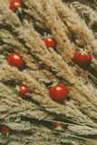 Fresh tomatoes. Tomatoes, homemade, tiny, cherri, dry grass, spikelet, food, vegetables stock images