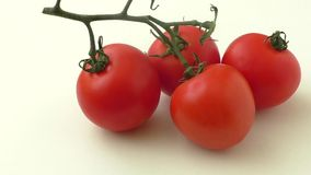 Fresh tomatoes isolated on the white background stock video footage