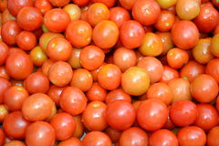 Fresh tomatoes. Just washed and prepared for processing or preservation Royalty Free Stock Image