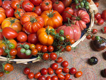 Fresh tomatoes, many varieties. Royalty Free Stock Images