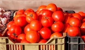 Fresh tomatoes at market Stock Image