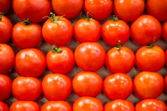 Fresh Tomatoes at a Market Royalty Free Stock Photography