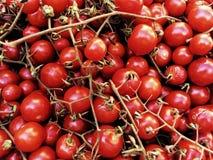 Fresh tomatoes named `datterini` stock images
