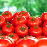 Fresh tomatoes outdoor Royalty Free Stock Photography