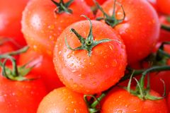 Fresh tomatoes over white Royalty Free Stock Photo