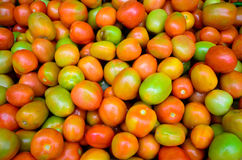 Fresh tomatoes. Photo of very fresh tomatoes Royalty Free Stock Image