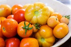 Fresh Tomatoes in a plastic bowl Stock Photo