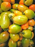 Organic green tomatoes. Plenty of fresh green tomatoes in market stall Royalty Free Stock Images