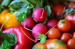 Fresh tomatoes, radishes, peppers and parsley Royalty Free Stock Images