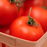 Fresh tomatoes. Ripe tomatoes close up, selective focus Stock Photography
