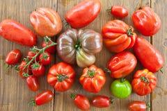 Fresh tomatoes Stock Photography