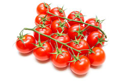 Fresh Tomatoes on the stalk Royalty Free Stock Images