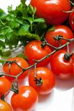 Fresh tomatoes. With stem closeup Royalty Free Stock Photos