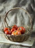 Fresh tomatoes on straw Royalty Free Stock Image