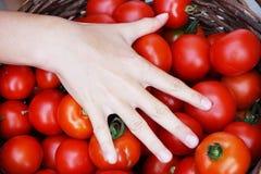 fresh tomatoes texture Royalty Free Stock Photo