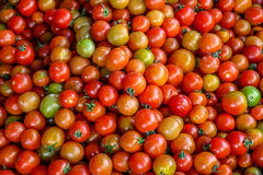 Fresh tomatoes. Tomato is a glossy red, or occasionally yellow, pulpy edible fruit that is typically eaten as a vegetable or in salad Royalty Free Stock Photography