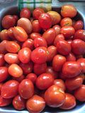 Fresh tomatoes royalty free stock photo