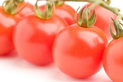 Fresh tomatoes on vine Royalty Free Stock Photography