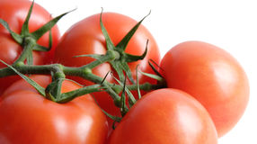 Fresh tomatoes on vine. Isolated Royalty Free Stock Images