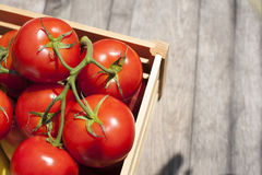 Fresh tomatoes on the vine in a wooden crate. Fresh tomatoes on the vine in a wooden crate Royalty Free Stock Photo