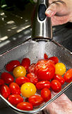 Fresh Tomatoes. Royalty Free Stock Photography