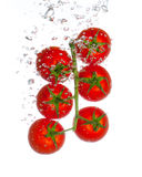 Fresh tomatoes with water bubbles isolated on whit Stock Photos